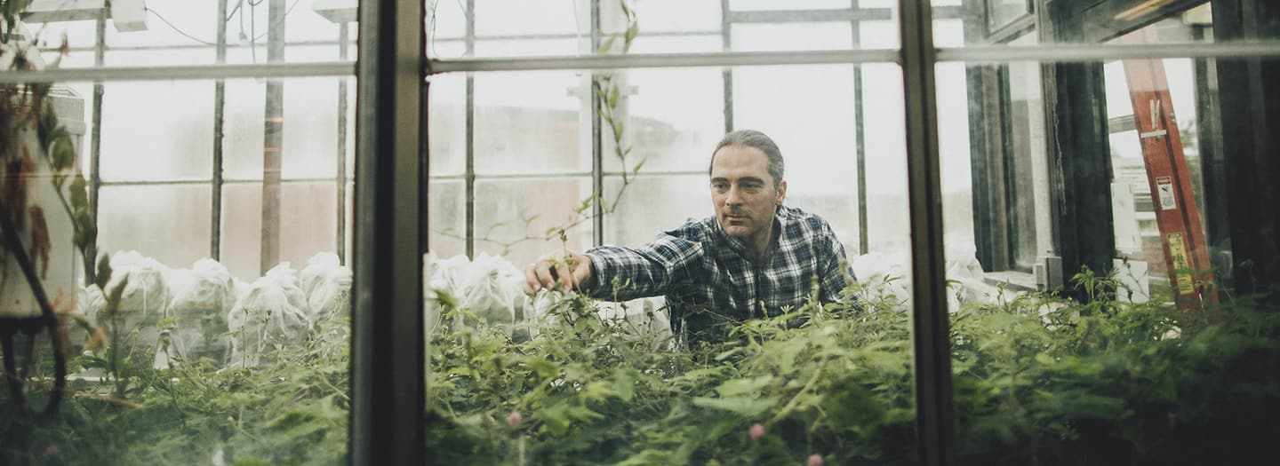 Andre Kessler in the greenhouse inspecting plants