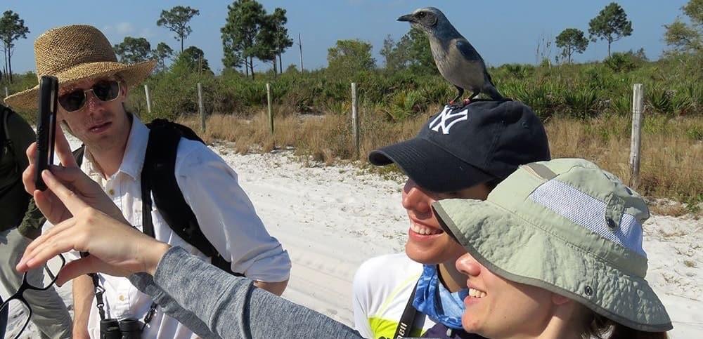Bird resting on hat