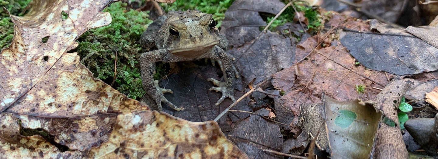 A little toad in the woods