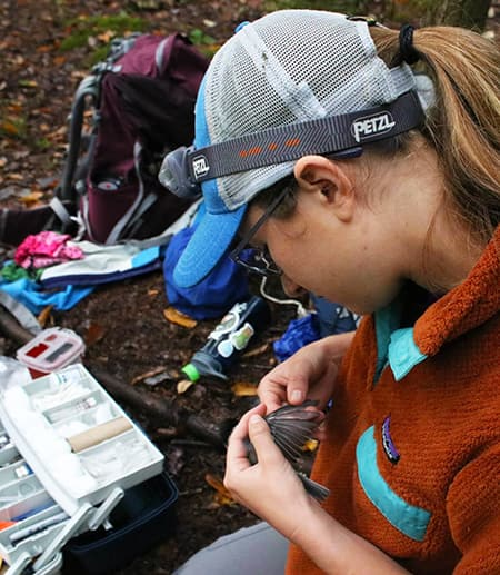 Colleen Miller banding black-capped chickadees and putting tags on them