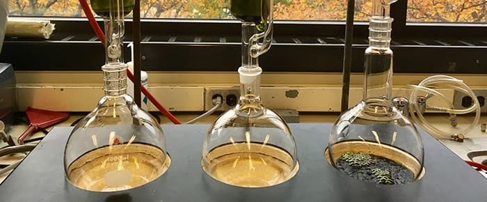 Sample flasks in a lab located in Corson Hall, the home of EEB
