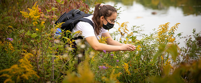 A student shown doing research in a field of wildflowers