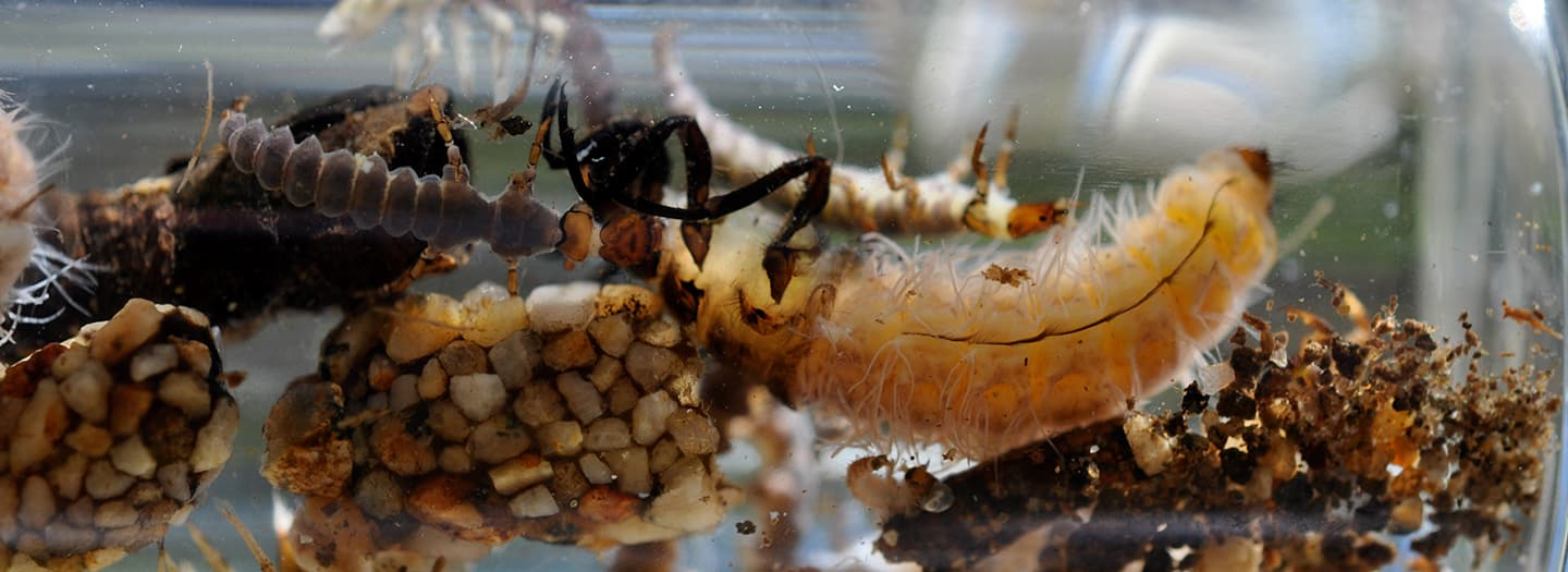 Aquatic insects underwater scene