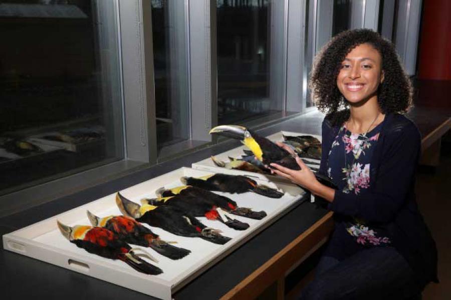 Grad student Amelia-Juliette Demery shown with bird specimens