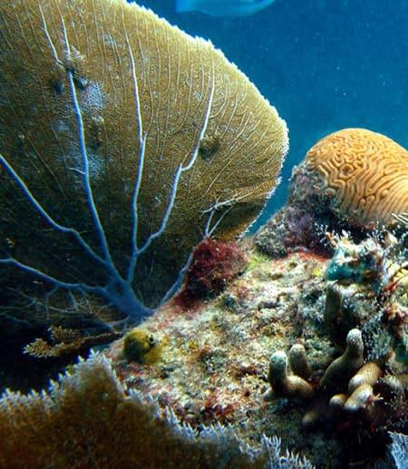 healthy coral fan